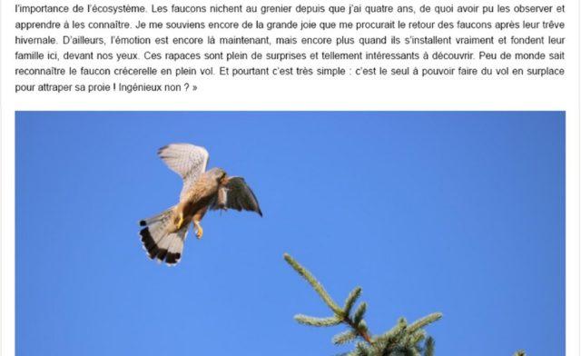 interview Cyril BOUR BLE Lorraine faucon théding