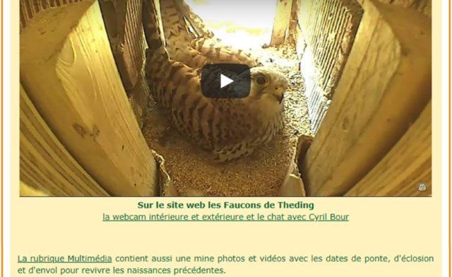 Lorraine Au Coeur Faucons Théding 2018