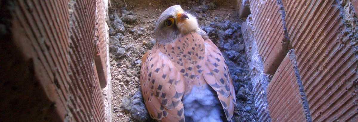 Die Falken von Théding