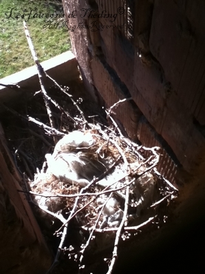 Nest of the squirrel