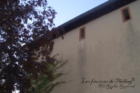 Le nid des faucons
