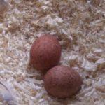 2, 3, 4, 5 Eier