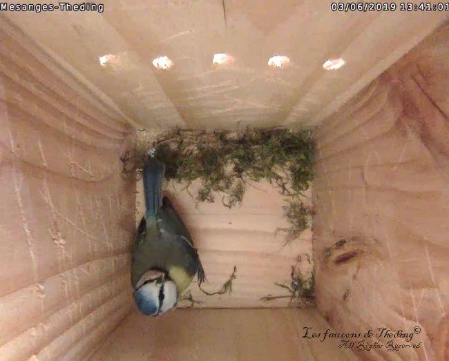 Début de la construction du nid !