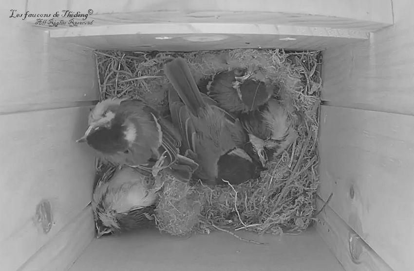Une mauvaise journée au nid