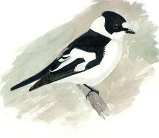 Centre Ornithologique de Lorraine