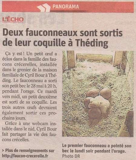 faucons Théding naissance républicain Lorrain 2018